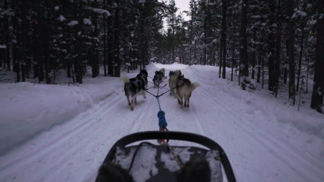 pov hund släde genom snön - hunddjur bildbanksvideor och videomaterial från bakom kulisserna