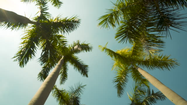 Pov Driving Sunshine Climate Tropical Palm Trees. Landscaped Avenue Blue Sky Background Tropical Palm Trees Foliage Suburban coconut palm tree stock videos & royalty-free footage