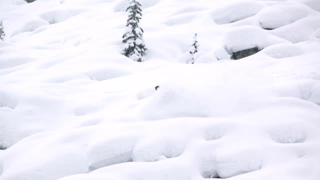 Powder Puffs video