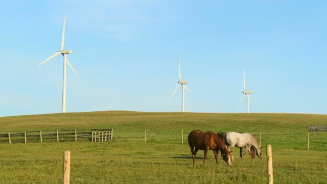 HD: Power Generating Wind Turbines video