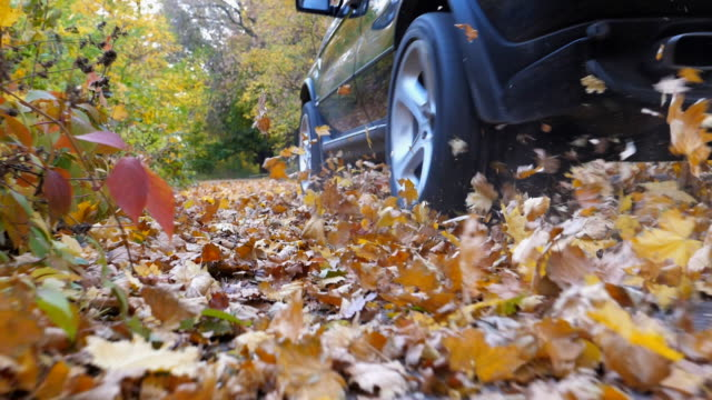 Powerful car crossing through alley at sunny day. Colorful autumn foliage flies out from under wheel of auto. Black SUV driving fast along an empty road over yellow leaves at park. Low angle view