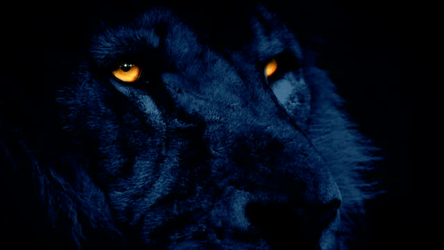 Powerful Lion Face Looking Around At Night