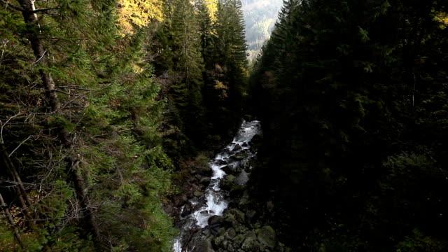güçlü dağ nehir ile çam ağacı orman polonya zakopane, morskie oko gölü yolculuk tutkusu yakınındaki yüksek tatra dağları (vysoke tatry), şelaleler - zakopane stok videoları ve detay görüntü çekimi