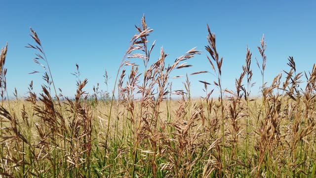 vídeos de stock e filmes b-roll de prairie grass blowing in the wind - prado