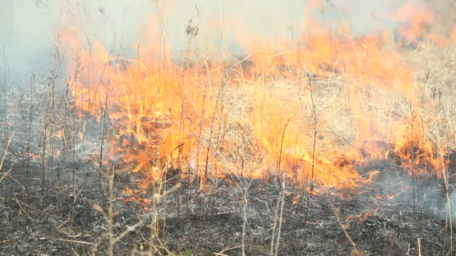 Prairie Gras Feuer Flamme in Bewegung-Linie – Video