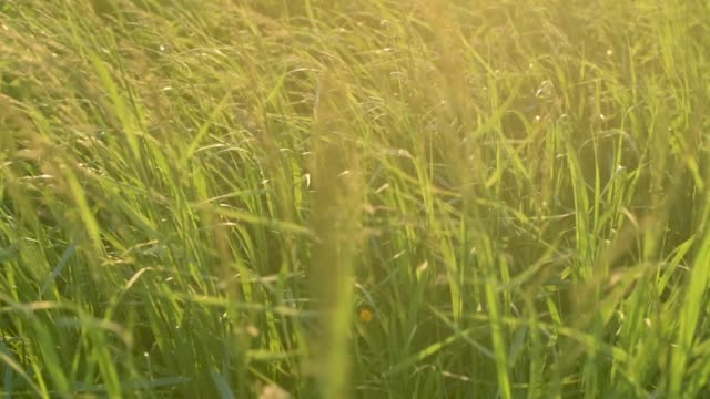 Prairie Grass Sunset Slow Motion video