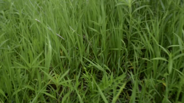 Prairie Life Native Grasses Number 1 video