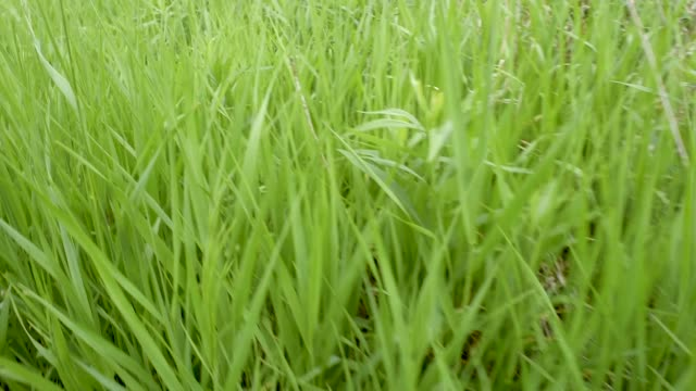 Prairie Life Native Grasses Number 2 video
