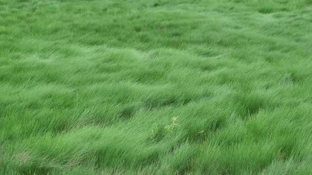 Prairie wind blowing video