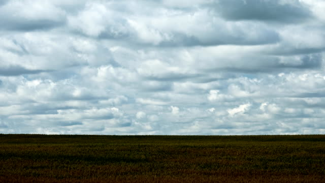 Prairie Wind video