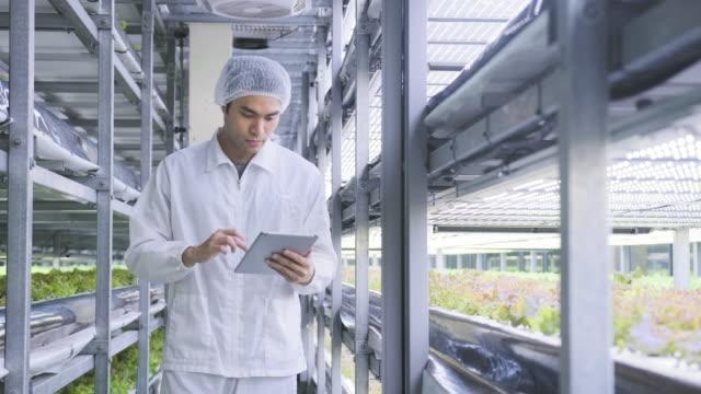 Precisie-landbouwer monitoring groei van binnengewassen video