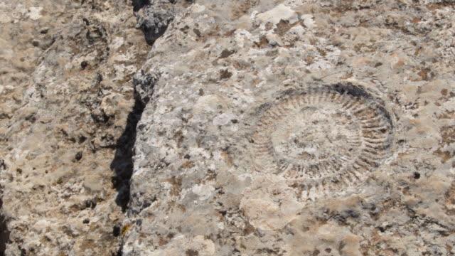 vidéos et rushes de ammonite fossile préhistorique dans les roches karstiques, torcal de antequera, espagne - coquille et coquillage
