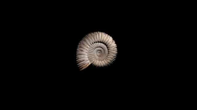 vídeos de stock, filmes e b-roll de pré-histórico amonite fóssil girando-loop - evolução