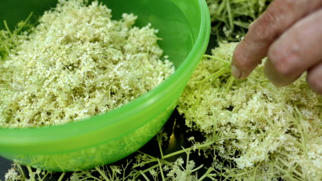 prepare elder berry flower heads to making jam of it. cutting off flower heads in a bowl. - sciroppo video stock e b–roll