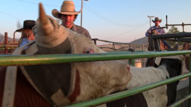 ロデオの牛を準備 ビデオ