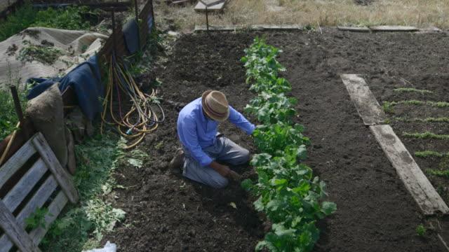 作物の植え替えの準備 - disruptagingcollection点の映像素材/bロール