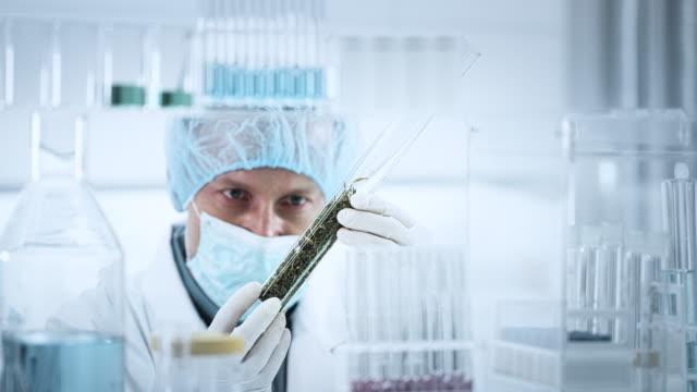 Preparing Medicine from Marijuana. Lab worker close up Man working in lab. Testing medical marijuana buds oncology stock videos & royalty-free footage