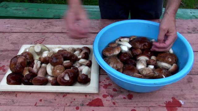 preparing  mushrooms cep boletus on table video