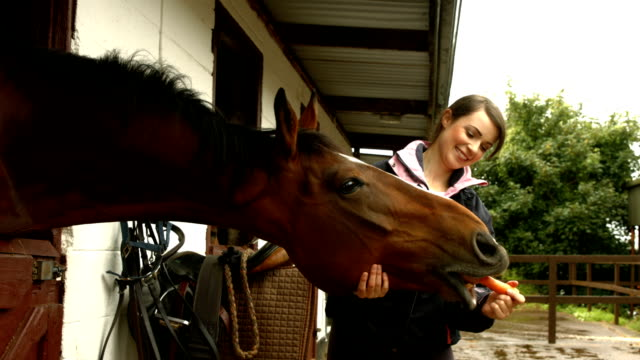 ziemlich brunette mit ihr pferd essen karotten - karotte peace stock-videos und b-roll-filmmaterial