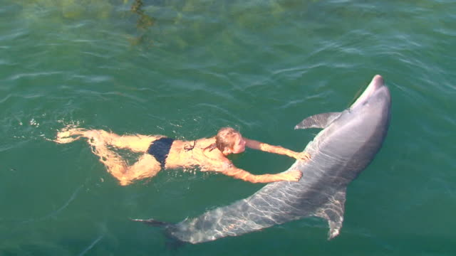 pretty girl playing with a great dolphin pretty girl playing with a great dolphin dolphin stock videos & royalty-free footage