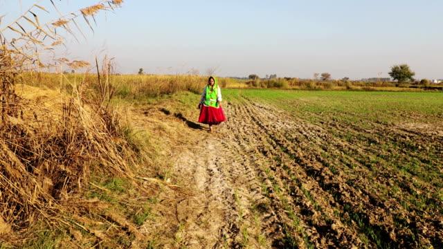 vacker dam bära matlåda i hennes hand & promenader genom fältet vete gröda - haryana bildbanksvideor och videomaterial från bakom kulisserna