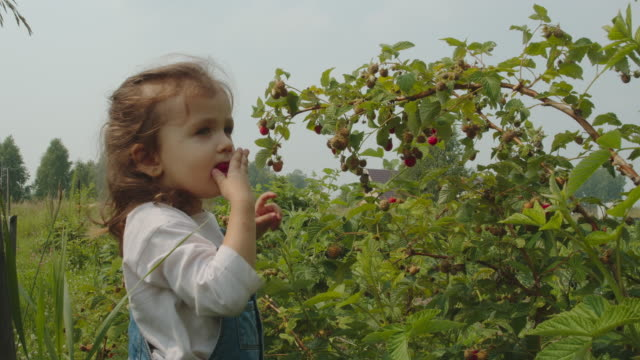 Pretty young girl eating red ripe raspberry from the bush in the garden. Summer harvest.