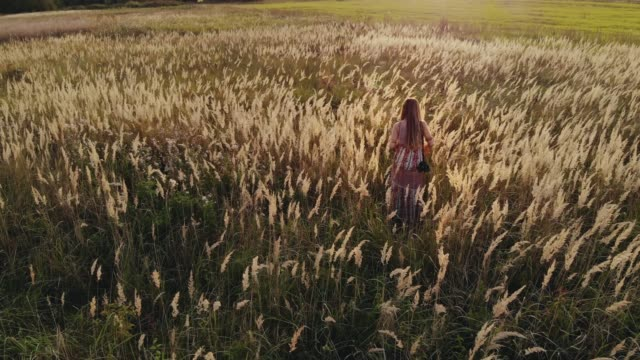 pretty young hippie woman with a camera on her shoulder walking through an field at sunset - boho chic filmów i materiałów b-roll