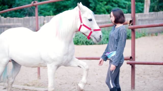 Pretty young woman strokes a graceful white stallion Pretty young woman strokes a graceful white stallion, close up animal markings stock videos & royalty-free footage