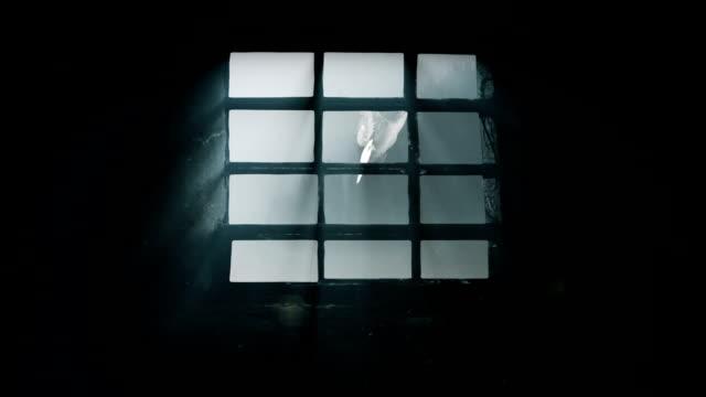 gefängnisfenster mit taube - käfig stock-videos und b-roll-filmmaterial