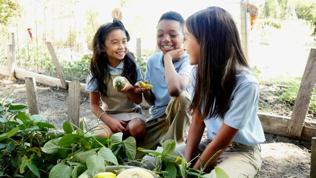 private studenti elementari su una visita a una fattoria locale esaminare banana pepe e zucchine - viaggio d'istruzione video stock e b–roll
