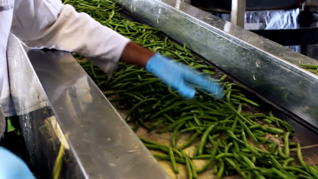 Processing vegetables video