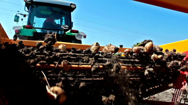 anbau von kartoffeln in das feld - knollig stock-videos und b-roll-filmmaterial