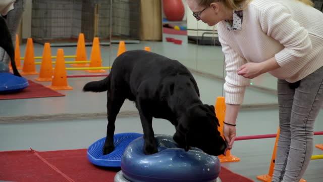 professionelle kynologe trainieren den hund, balance auf speziellen plattformen zu halten - mittelstufenlehrer stock-videos und b-roll-filmmaterial
