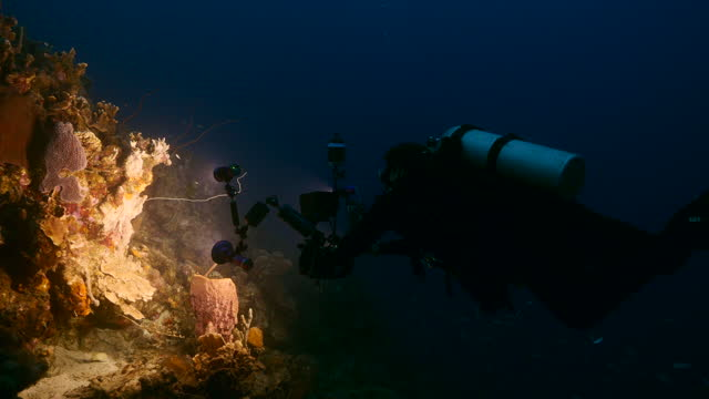 Professional diver / underwater cinematographer filming at night in coral reef of Caribbean Sea around Curacao video