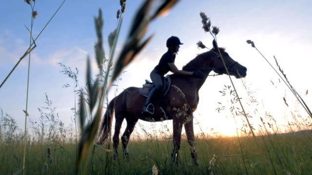 vidéos et rushes de le cavalier féminin professionnel s'assied sur un cheval dans un domaine - dressage équestre