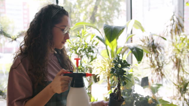 Professional florist sprinkling green potted plant with water enjoying work Professional florist sprinkling green potted plant with water enjoying work working alone in flower store. Occupation, floristry and young people concept. potted plant stock videos & royalty-free footage