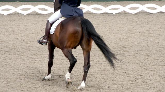 vidéos et rushes de équitation professionnelle - dressage équestre