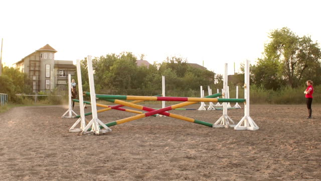 Professional rider on a horse jumps over a barrier video