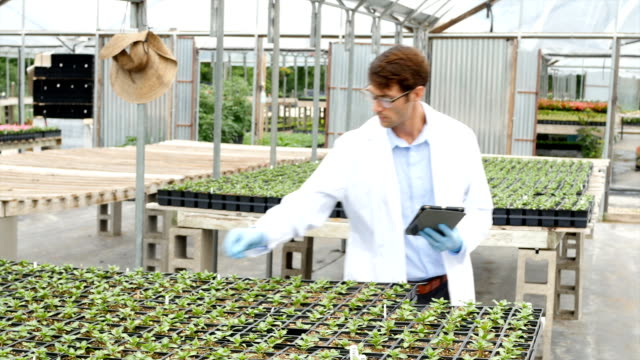 Professional scientist studying plant life in greenhouse laboratory video