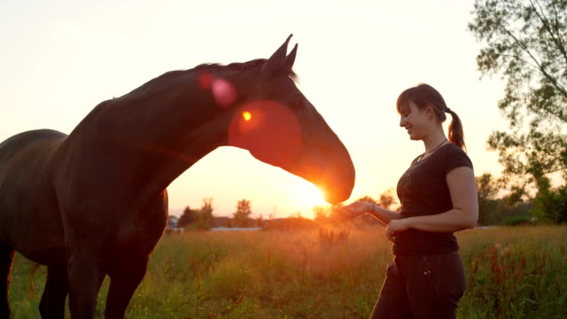 SLOW MOTION: Profile of a girl feeding treats to the horse on pasture at sunset