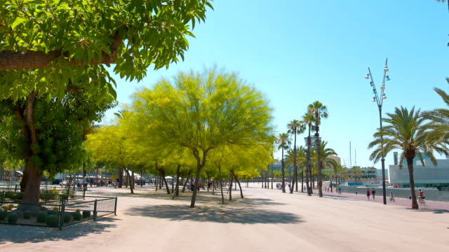 Promenade in Barcelona, clear blue sky and green trees, summer outdoors video