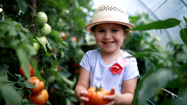 Proud child holding her first grown tomato Gorgeous and lovely child in a greenhouse, checking on tomato plants, looking if they are ripe. horticulture stock videos & royalty-free footage