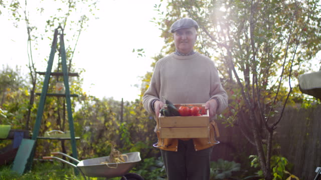 taze sebze sandık ile poz gururlu erkek bahçıvan - bahçe ekipmanları stok videoları ve detay görüntü çekimi