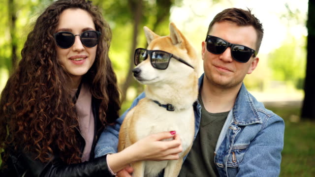 proud owners are putting sunglasses on adorable shiba inu puppy, laughing and chatting relaxing in city park in summer. people, animals, nature and fun concept. - okulary przeciwsłoneczne filmów i materiałów b-roll