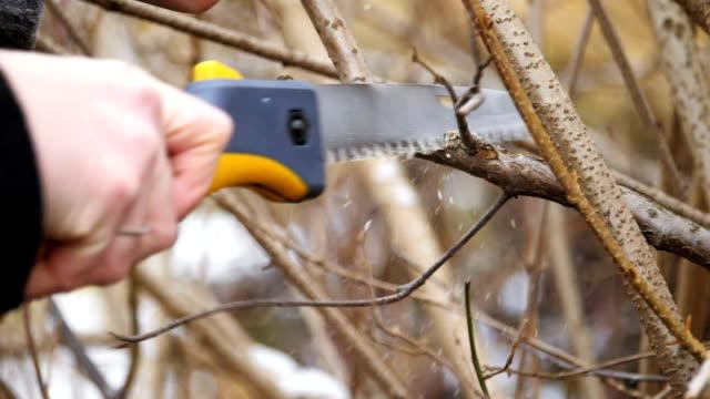 vidéos et rushes de élagage des branches. scies et sécateurs. soufflage des copeaux de bois. version 2 - haie