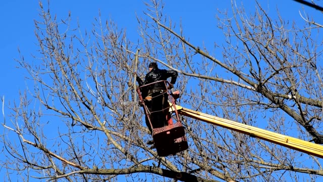 Pruning trees using a lift-arm video