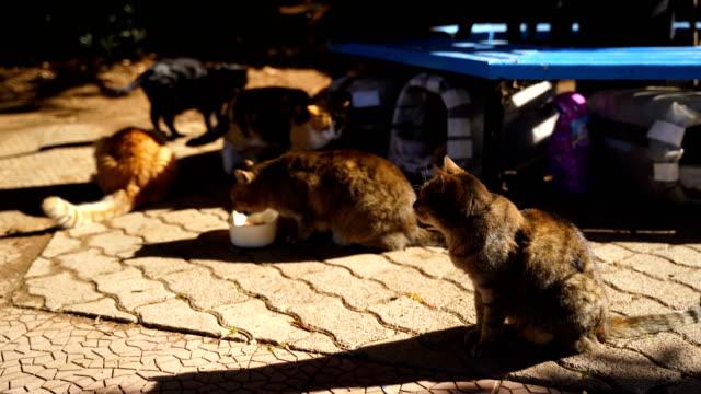 Public asylum for cats video