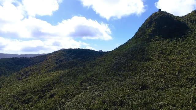AERIAL Puerto Rico El Yunque Forest Trees AERIAL Puerto Rico El Yunque Forest Trees puerto rico stock videos & royalty-free footage
