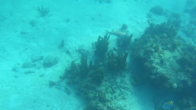 stockvideo's en b-roll-footage met kogelvissen die onderwater in oceaan zwemmen - providenciales