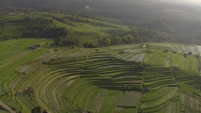 拉開無人機拍攝在印尼蓬勃發展的水稻梯田種植園。 - 東南 個影片檔及 b 捲影像
